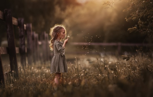 Picture summer, grass, nature, the fence, the evening, girl, dandelions, child, Marina Petro