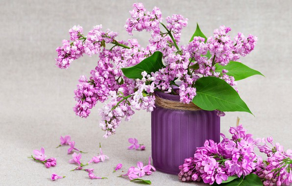 Picture background, still life, lilac