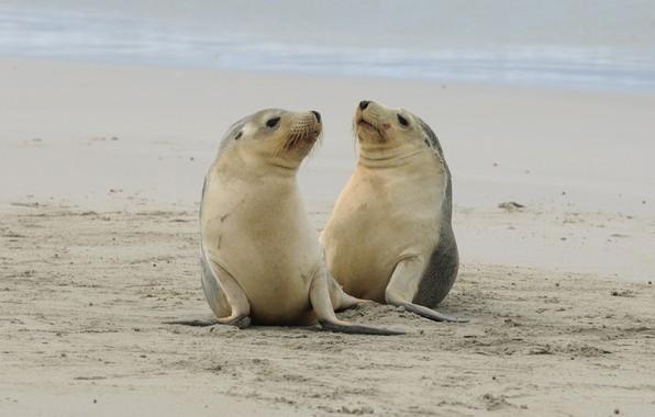 Picture nature, shore, seals