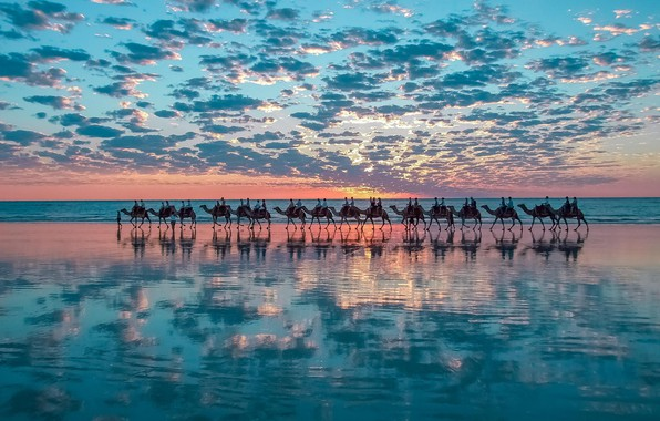 Picture nature, sunset, water, clouds, mirroring, stove, camels, bedouin