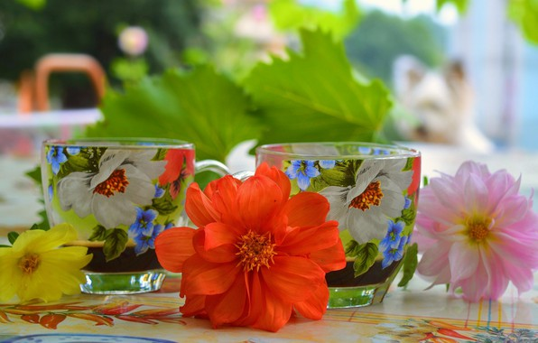 Picture Flowers, Cup, Flowers