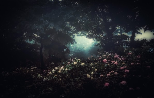 Picture flowers, fog, the darkness