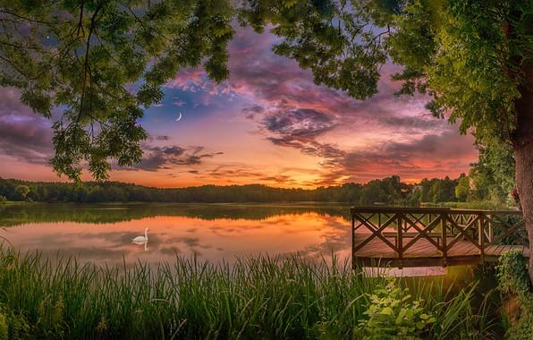 Picture summer, sunset, lake, tree, bird, Swan