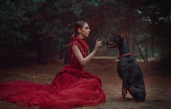 Picture forest, girl, style, hand, dog, dress, pine, red dress, gesture, Doberman, Anastasia Dobrovolskaya