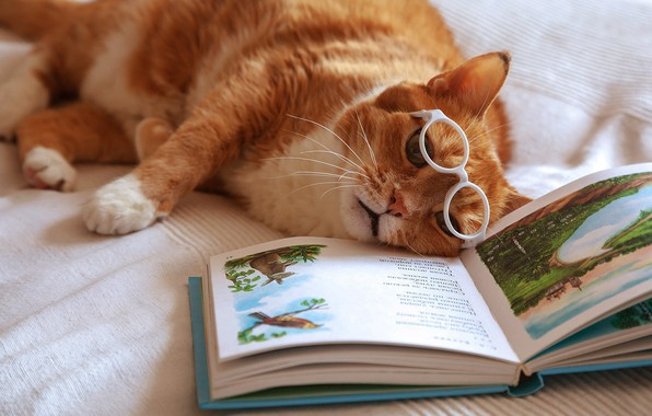 Picture cat, red, glasses, tired, book