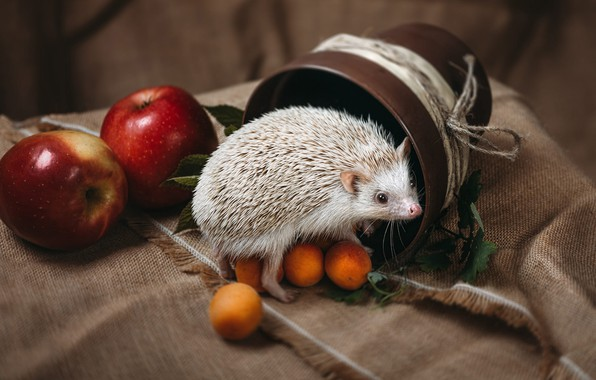 Photo wallpaper greens, white, look, needles, background, apples, rope, fabric, pot, animal, hedgehog, fruit, still life, burlap, ...