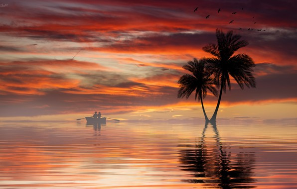 Picture water, sunset, palm trees