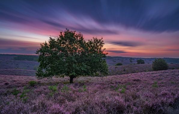 Picture Sunrise, purple, Color explosion