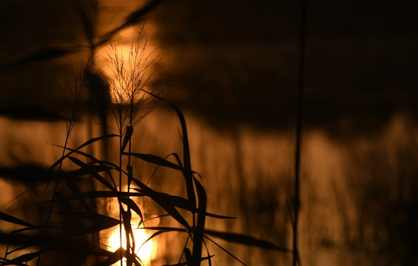 Picture leaves, the sun, macro, light, stems, plant, shadow, silhouette
