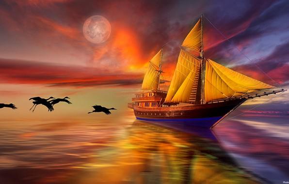 Picture sea, the sky, birds, sailboat