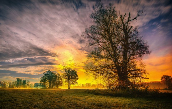 Picture the sky, grass, trees, sunset, nature, spring