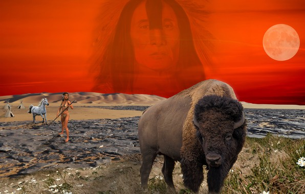 Picture photoshop, Prairie, Indian, Buffalo, woman, camp
