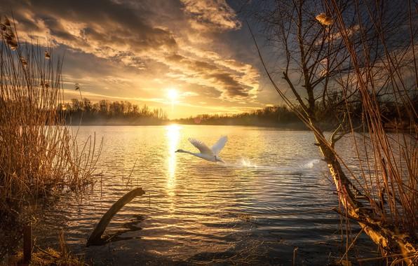 Picture autumn, the sun, sunset, nature, lake, Swan, pizza, Pahar