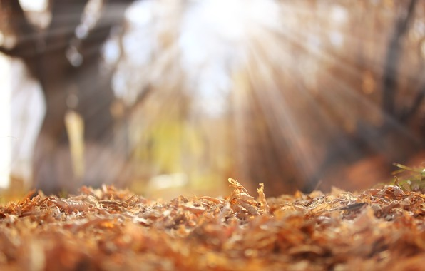 Picture autumn, leaves, rays, background