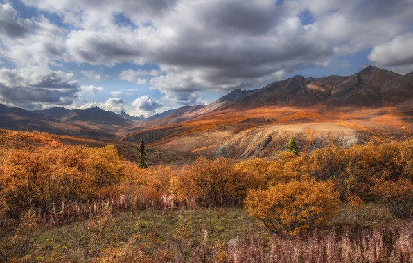 Picture autumn, clouds, landscape, mountains, nature, vegetation, valley, Canada, grass, the bushes, tundra, Yukon