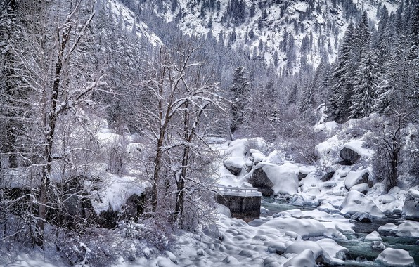Picture winter, snow, trees, landscape, nature, river, beauty