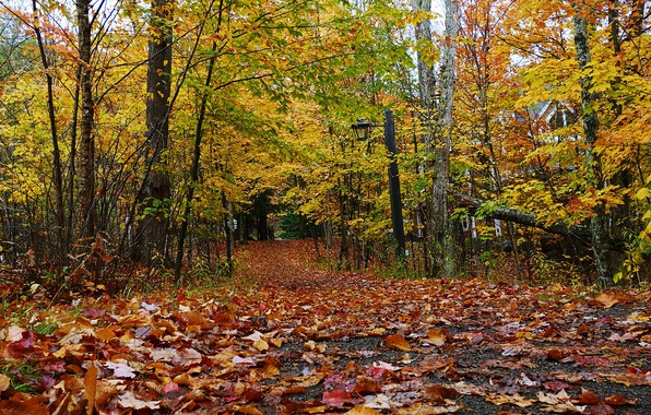 Picture autumn, forest, foliage, dachas
