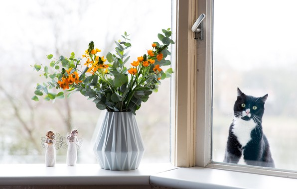 Picture cat, eyes, cat, look, glass, flowers, pity, black, the situation, bouquet, humor, window, muzzle, vase, …