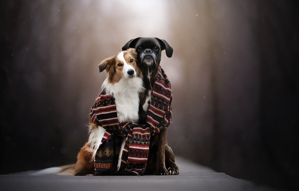 Picture dogs, background, scarf