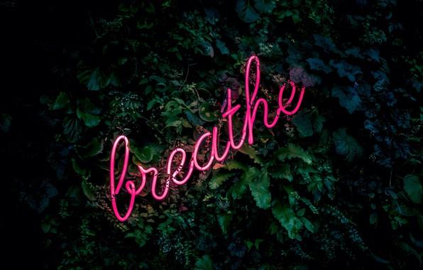 Picture leaves, letters, the inscription, neon, neon, breathe