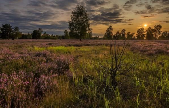 Picture field, the sun, landscape, nature, beauty, meadow