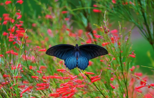 Picture macro, flowers, nature, green, background, stems, butterfly, red, insect, blue, blurred