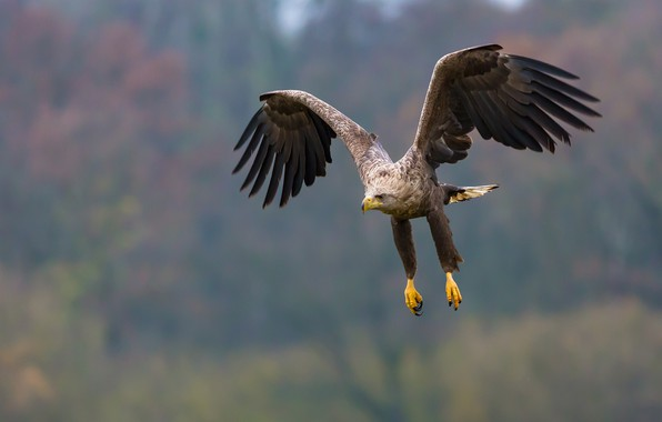 Picture flight, feathers, eagle