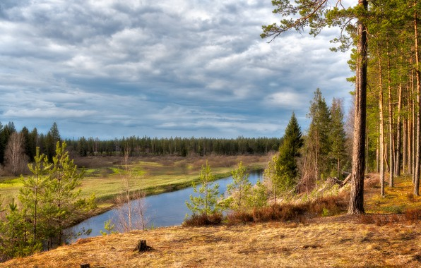 Picture landscape, nature, river, ate, pine, forest