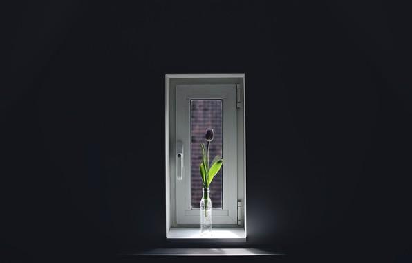 Picture flower, Tulip, window