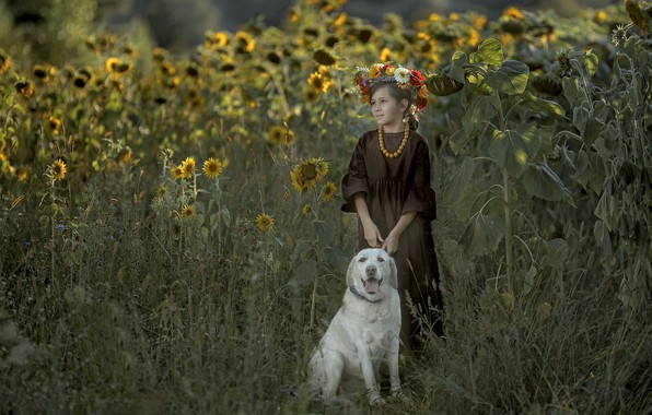 Picture sunflower, dog, girl