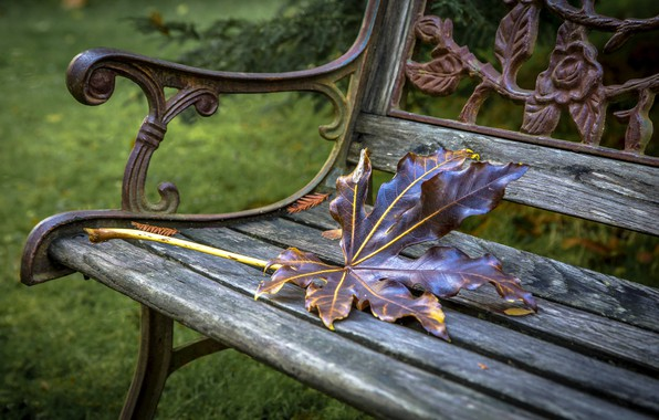 Picture autumn, sheet, bench