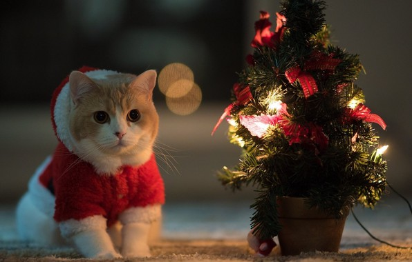 Picture night, mood, cute, Christmas, kawaii, red, christmas, night, cat, cute, christmas tree
