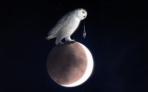 Picture Owl, Bird, The moon, Space, Art, Owl, Into The Bear, by Into The Bear, Cold …