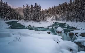 Picture winter, forest, snow, trees, river, Canada, Albert, Alberta, Canada, Jasper National Park, Jasper national Park, …