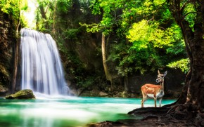Picture forest, trees, nature, animal, waterfall, deer, Thailand, Thailand, national Park, province, reserve, Kanchanaburi, Province, Erawan, …