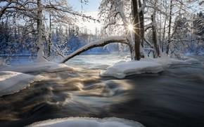 Picture winter, snow, trees, river, Finland, Finland, Kuusaankoski River, Река Куусаанкоски