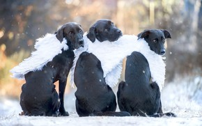 Picture winter, autumn, dogs, look, light, snow, nature, pose, Park, back, portrait, wings, dog, angel, angels, …