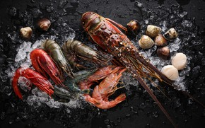 Picture scallop, shell, Omar, shrimp, seafood