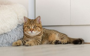 Picture Ottomans, lying on the floor, tabby cat