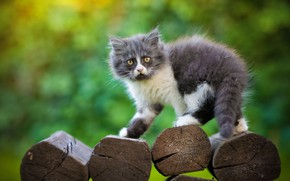 Picture look, background, fluffy, kitty, logs, Yuriy Korotun