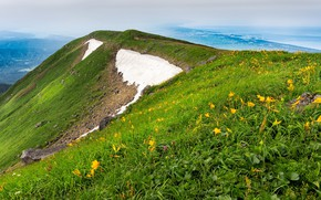 Picture greens, grass, snow, flowers, mountains, fog, the slopes, mountain, spring, dal, yellow, slope, hill, Asia, …
