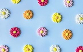 Picture flowers, background, blue, colorful, blue, flowers