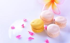 Picture flower, sweets, Petals, cakes, plumeria, Cakes, Pasta