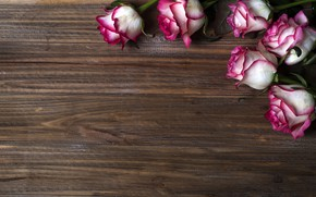 Picture flowers, roses, pink, buds, wood, pink, flowers, beautiful, roses
