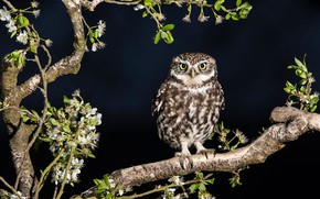 Picture look, leaves, branches, owl, bird, black background, owl