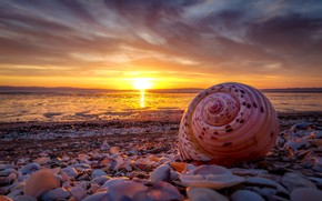 Picture sea, beach, the sky, the sun, clouds, sunset, shore, coast, beauty, the evening, sink, shell, …