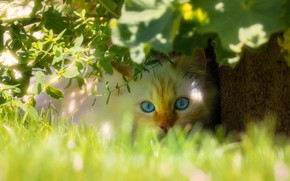 Picture cat, white, grass, cat, look, face, leaves, light, branches, nature, pose, background, portrait, garden, red, …