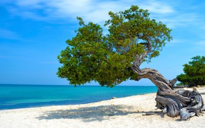 Picture sand, sea, beach, tree, Caribbean