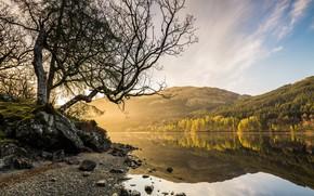 Picture lake, tree, morning
