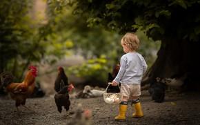 Picture boy, eggs, chicken